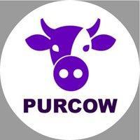 PurCow